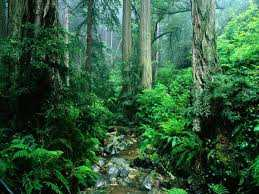 floresta-amazonica-1