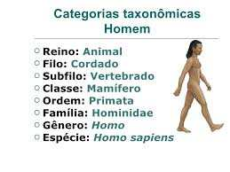categorias-taxonomicas-do-homem