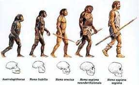 homo-sapiens-6